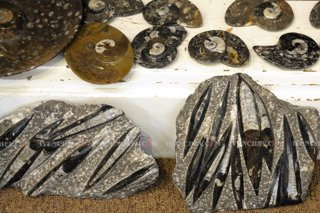 320_02_3901_fossils